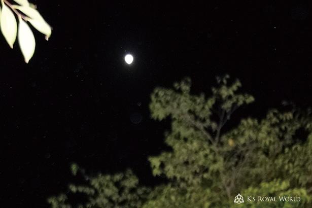 神泉苑月のみ